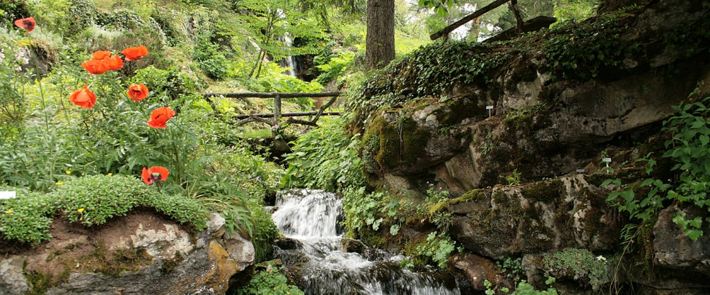 0_jardin_botanique_alpin_la_jaysinia_-_samoens_1